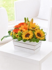 Lily, Germini and Sunflower Arrangement