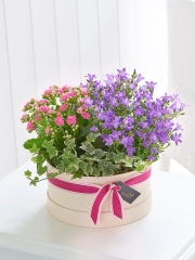 Summer Flowering Planter